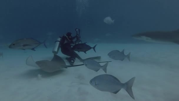 INDIAN OCEAN, MALDIVES, ASIA - MARCH 2018:  Male scuba diver shooting nurse sharks. Tawny nurse shark (Nebrius ferrugineus), Indian Ocean, Maldives