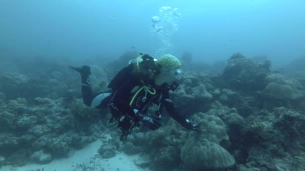 INDIAN OCEAN, MALDIVES, ASIA - MARCH 2018: Young beautiful woman scuba diver swims over coral reef in blue water - Indian Ocean, Maldives