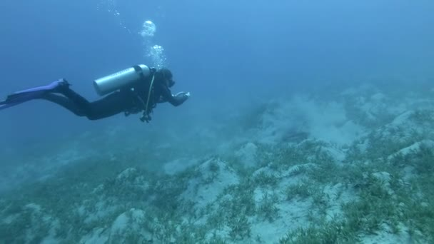 Female scuba diver makes photo-video registration injured Green Sea Turtle on the seabed that dug into the silt and rests in depth. Tortoise shell badly damaged by a speedboat propeller