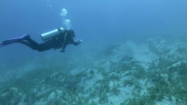 Žena potápěč dělá foto-video registrace zraněn Green Sea Turtle na mořském dně, které se zaryl do bahna a odpočívá v hloubce. Želví krunýř těžce poškozen vrtule motorového člunu