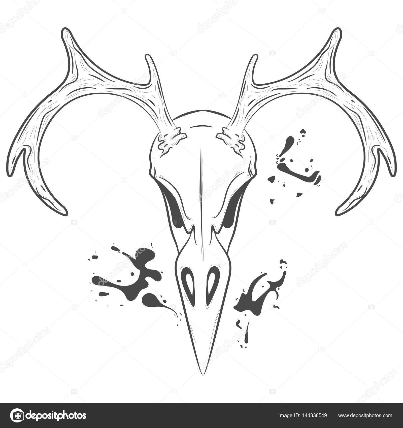 Bird Skull with antlers. Vector print — Stock Vector © Hmarka #144338549