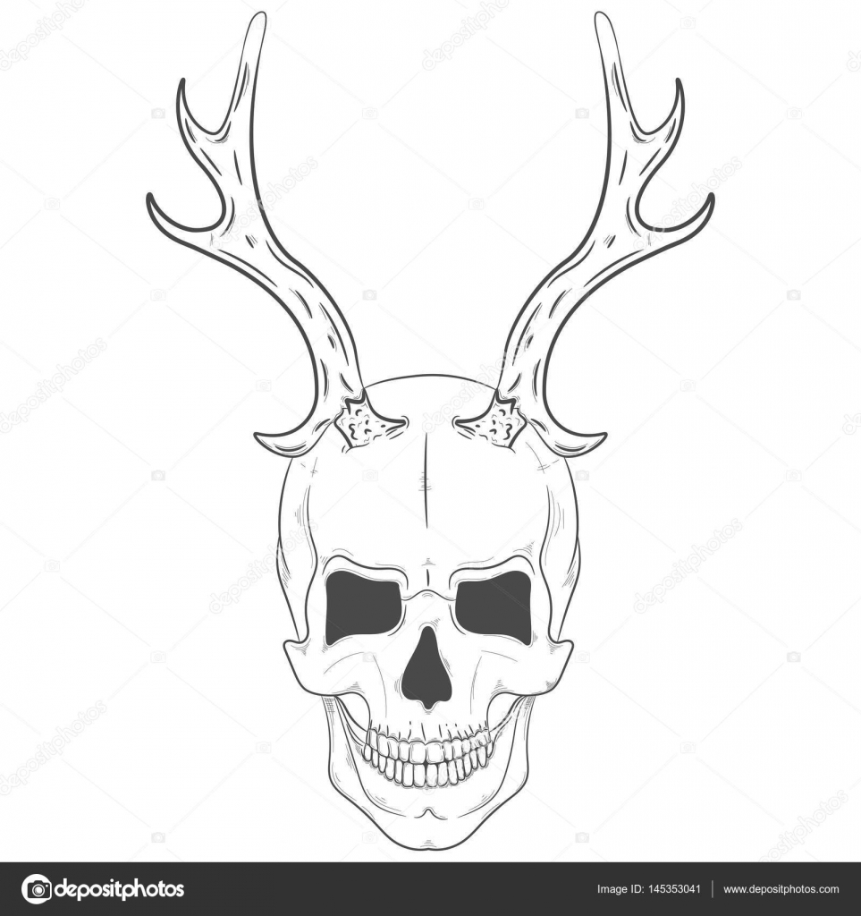 Illustration of a skull with horns. Vector print skull with antlers ...