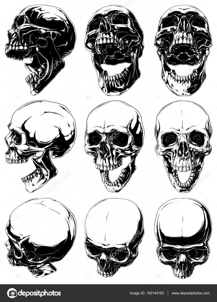 Conjunto de vector de cráneos gráfico detallado fresco realista ...