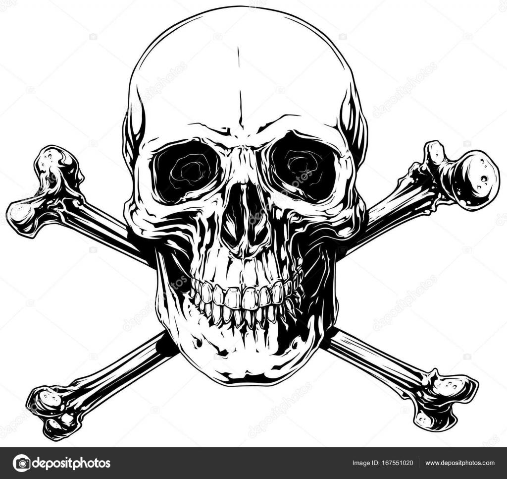 Gráfico detallado cráneo humano con huesos cruzados — Vector de ...