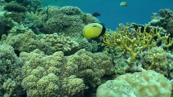 Beautiful picture of a reef with different types of coral and fish beautiful picture of a reef with different types of coral and fish swimming around publicscrutiny Images