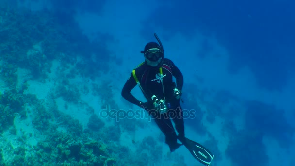 swimming diver couple