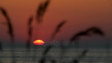 Sea sunset with the transfer of focus on the blades of grass in the foreground.