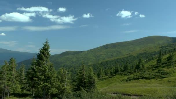 Horská krajina s smrkového lesa v popředí.