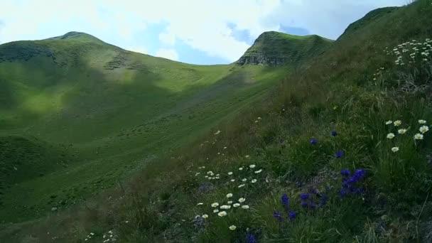 Stíny mraků rychle kloužou podél horského svahu, bush modré květy