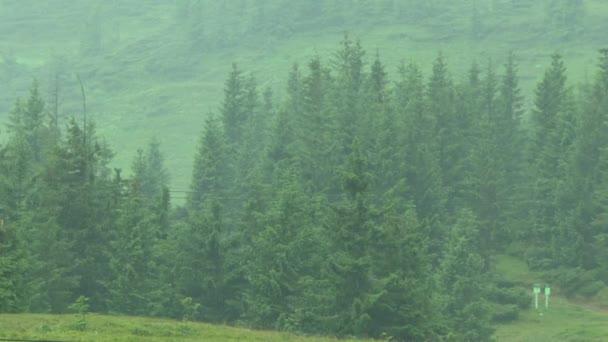 Tannenwald bei Regen.