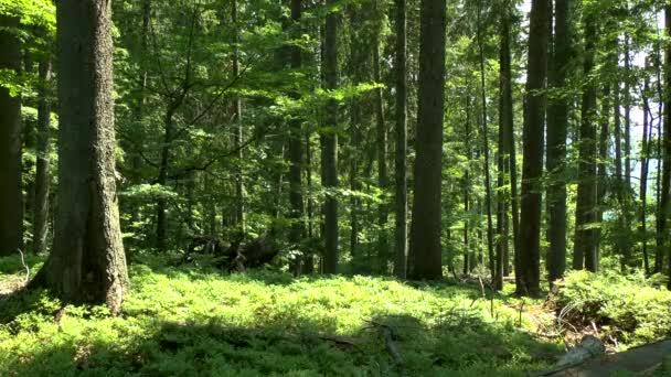 Divoký horský Les: kmeny.