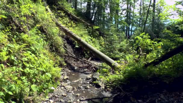 Wild forest: a stream flowing among the stones and fallen trees.