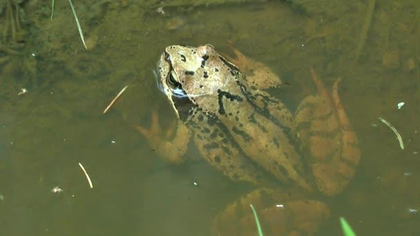 Louže na opuštěné lesní cestě: žába do vody.