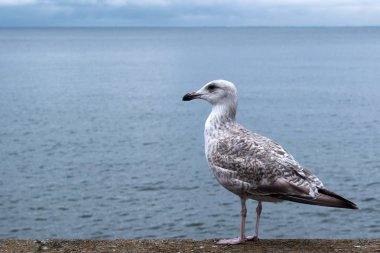 Seagull on the beach. Tourism, travel