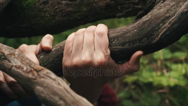 Young courageous hiker climbs up top by slope clinging to the roots of trees