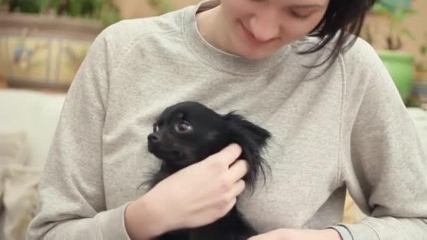Fiatal nő stroke egy kisállat chihuahua kutya a kanapén, otthon. Állatok-ellátás
