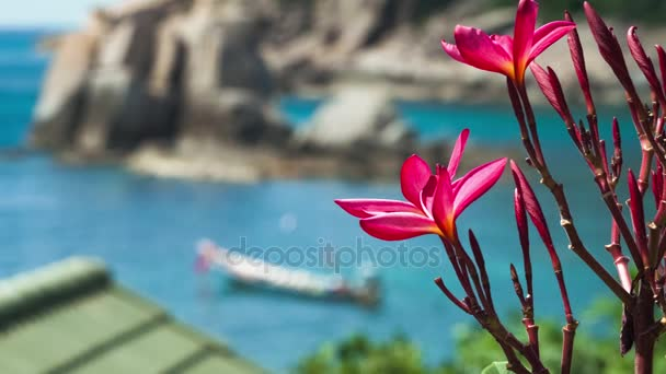Vivid red blossom plumeria. Longtail boat in the blue bay in background. Thailand, Asia