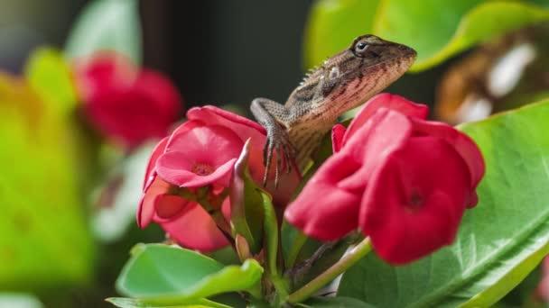Orientální zahrada ještěrka na euforii Krásný květ v Thajsku