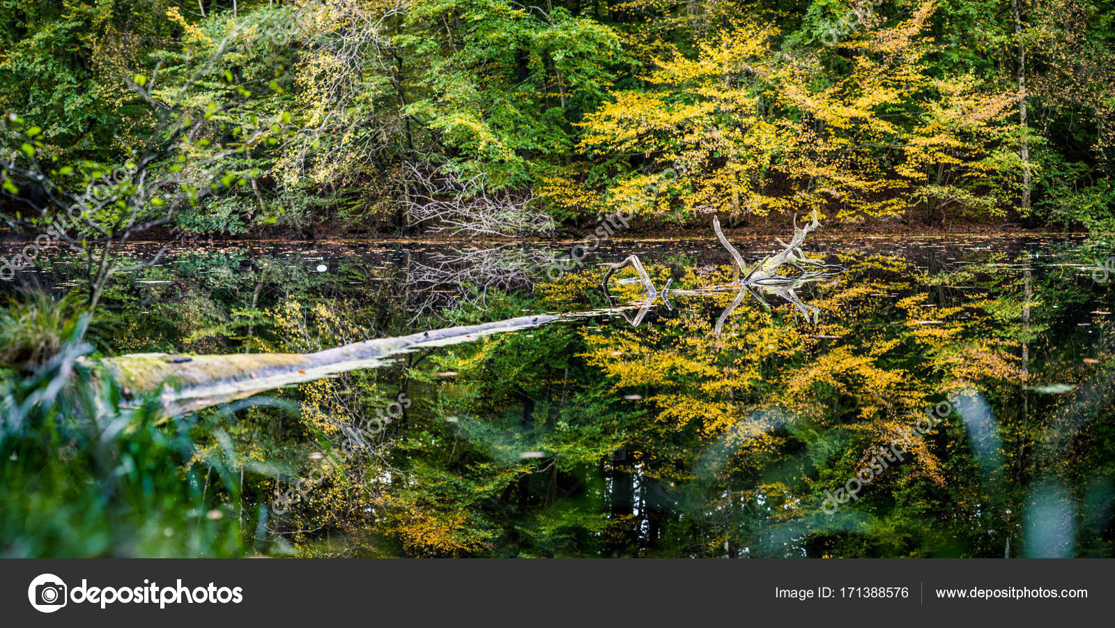 Beautiful autumn colored trees reflected in a small pond. One old ...