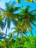 Fotografie Embudu Village Island, Malediven, Indischer Ozean