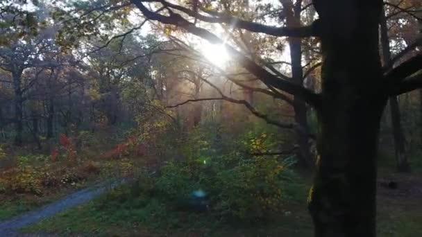 Anténa z podzimního lesa ráno, paprsky světla mezi stromy, barevné stromy