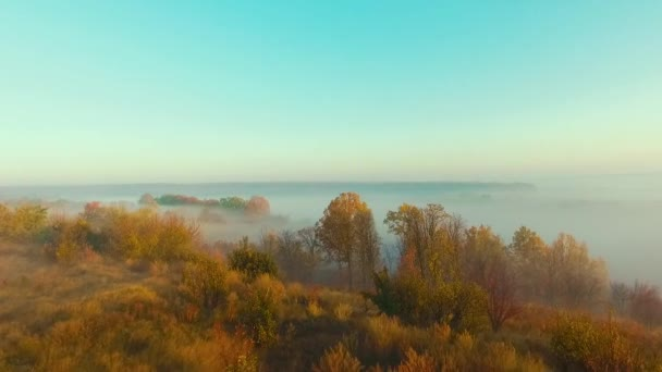 Thick fog over autumn forest