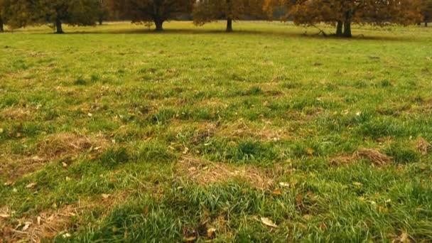 Podzimní krajina s oranžové podzimní dub v poli.