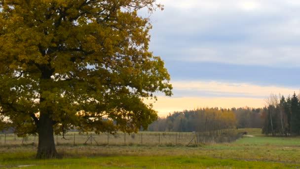 Podzimní krajina s oranžové podzimní dub v poli
