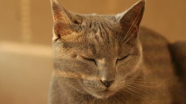 Detailní záběr portrét rodiny roztomilé kočky odpočívá.