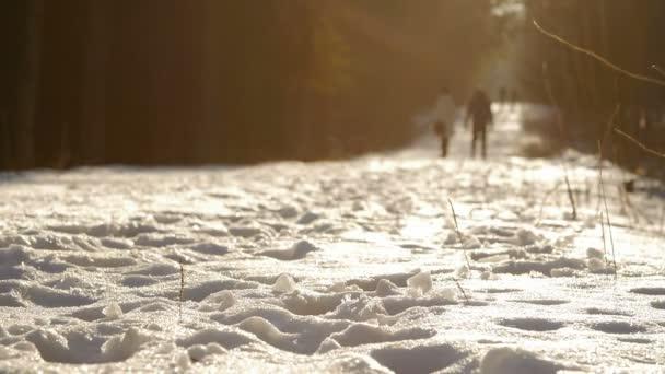 Jedná se o záběr z pár procházky v malebném parku zimní.