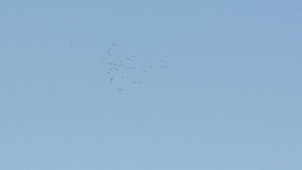 Ptáci krouží na obloze