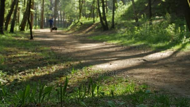 Muž majitel venčí psa podél lesní cesty na jaře.