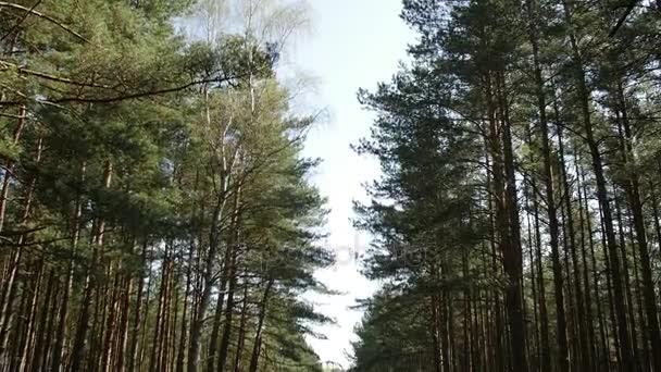 asfaltová cesta lesem zelená jarní