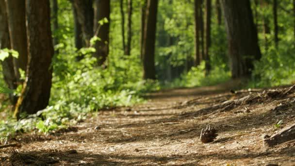 Intenzívní zelené listy z lesa. Jaro přichází do parku.