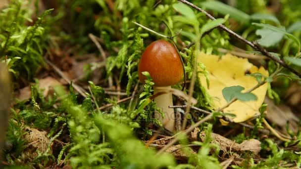 gomba az erdőben
