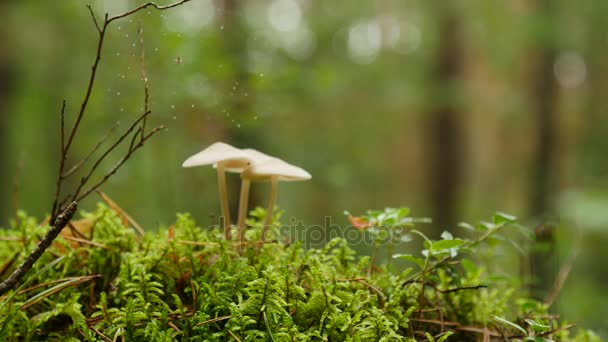 őszi erdőben, fák között moha gomba, közelről