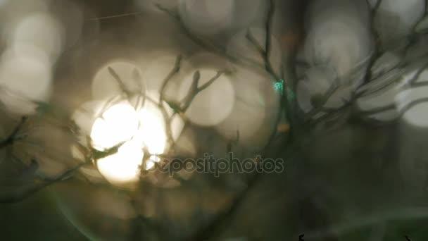 Slunce prosvítající skrze větve, přírodní rozostřeného pozadí, pozadí abstraktní příroda