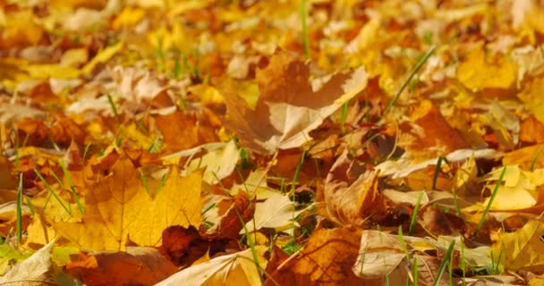 Autumn falling leaves closeup
