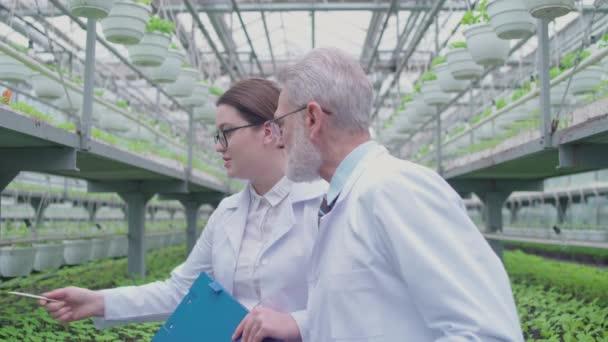Szakmai botanikusok megvitatása virágtermesztés melegházban, ökológia