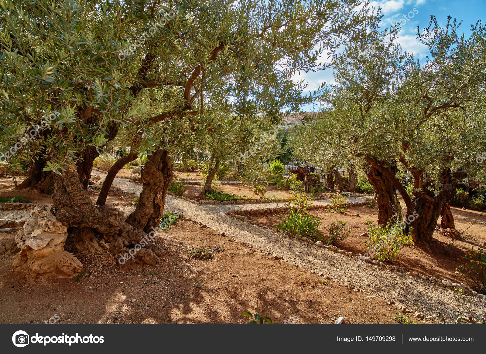 Gethsemane Olive Garden, Jerusalem U2014 Stock Photo