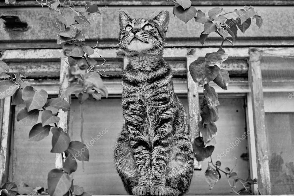Gray cat outdoors