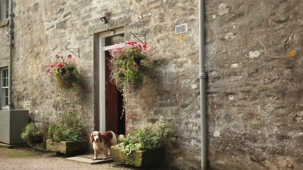 Spaniel cane a casa porta
