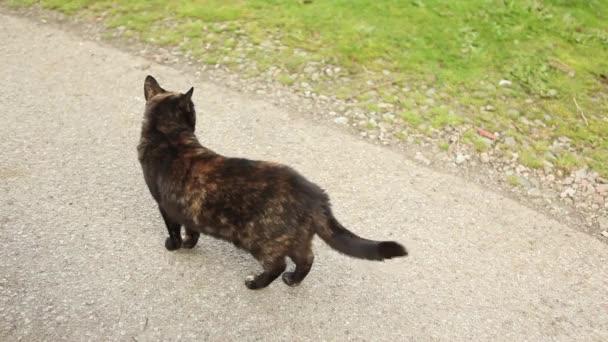 fekete macska kint