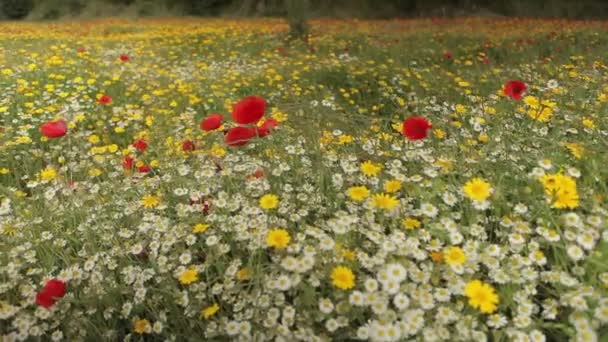 Colorful wildflowers field
