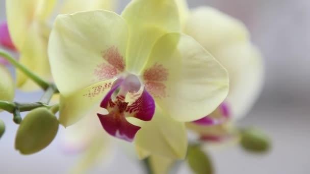 schöne gelbe Orchideen