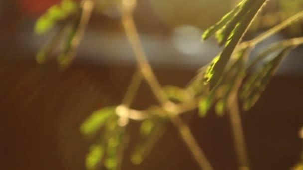sluneční světlo a stromové větvičky pozadí