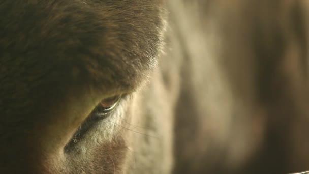 donkey animal looking into camera