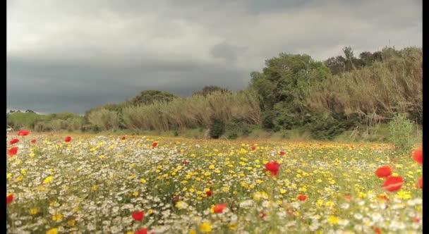Színes vadvirágok mező