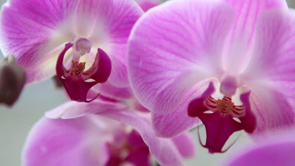 krásné růžové orchideje