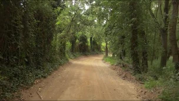 zelený les a cesta přírody